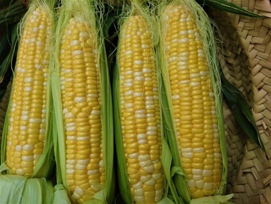 20170627_corn