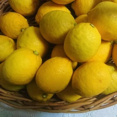 20180114_lemon2