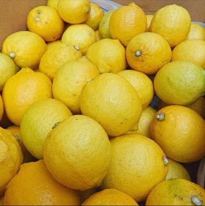 20190110_lemon